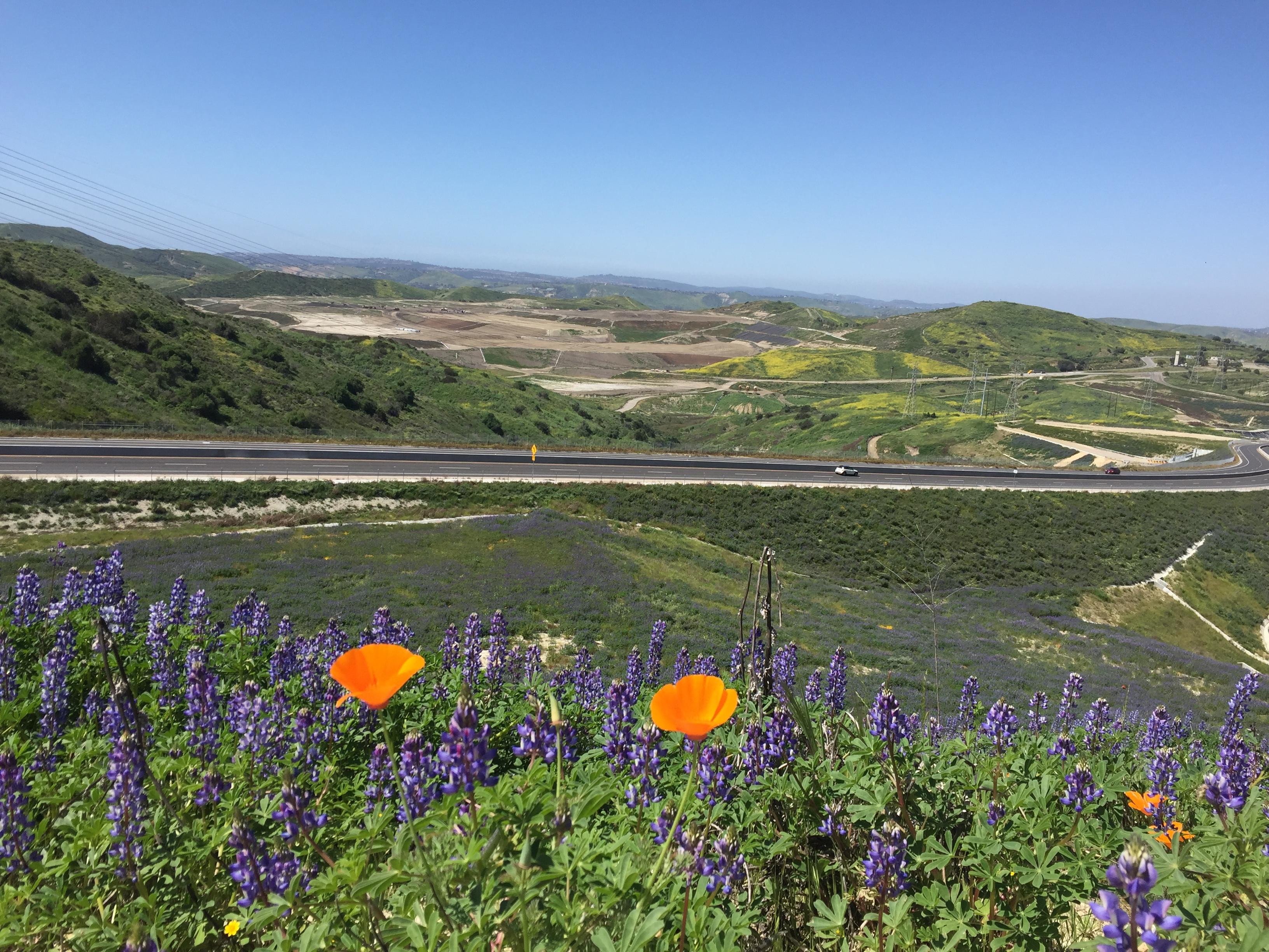 Prima-La Pata lupine field w poppy